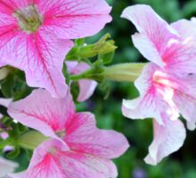 Pink flowers macro, natural background. Sticker