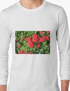 Red flowers bush. Long Sleeve T-Shirt
