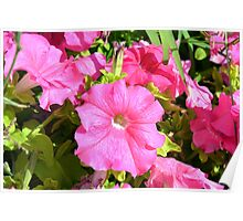 Pink flowers bush in the garden. Poster