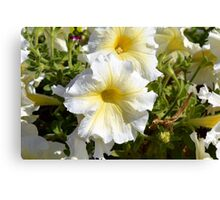 White beautiful flowers in the park. Canvas Print