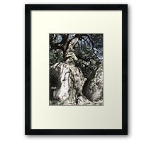 Tree on the rock Framed Print
