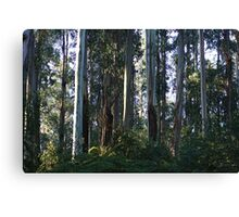 Eucalyptus Trees and Ferns  Canvas Print