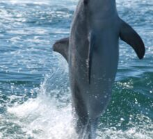 Dolphin at Play Sticker
