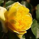 Rosa Happy Child (2) by kalaryder