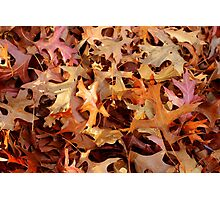 Russet riches Photographic Print