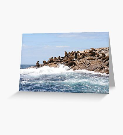 Australian fur seals, Bruny Island Greeting Card