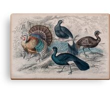 19th century artwork American Wild Turkey,  Canvas Print