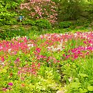 In the Primula Garden by Marilyn Cornwell