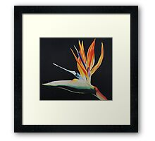 Bird of Paradise Print Framed Print