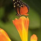 Butterfly #1 by Brian Avery