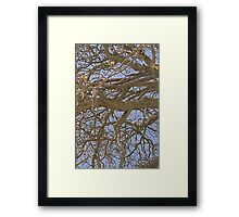 Gnarled Tree Abstract Framed Print