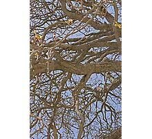 Gnarled Tree Abstract Photographic Print