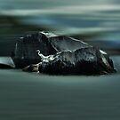Egret Rock by Wayne King