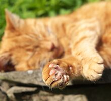 Ginger Cat Sleeping in Garden by RedSteve