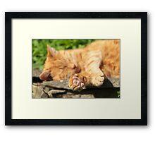 Ginger Cat Sleeping in Garden Framed Print