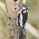 Spotted wood pecker  by Ray Jackson