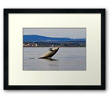 Dolphin having fun Framed Print