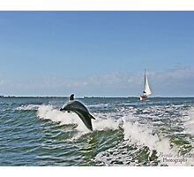 Dolphin Delight Photographic Print