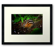Scurry Framed Print