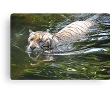 White Tiger Swimming Canvas Print
