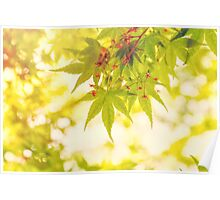 Green leaves of Japanese maple - vintage style Poster