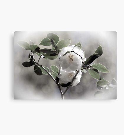 White Camellias Canvas Print