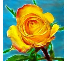 A yellow Rose . Photographic Print