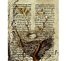 Nest Antique Bible Photographic Print