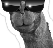 This Llama Doesn't Want Your Drama Sticker