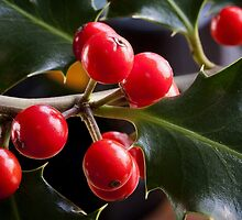 Red Berries by Hans Kawitzki