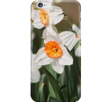 White Narcissus iPhone Case/Skin