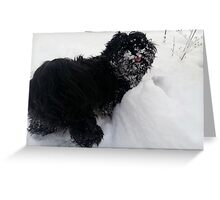 shih tzu tongue out Greeting Card