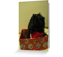 shih tzu Christmas time Greeting Card