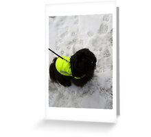 shih tzu winter Greeting Card