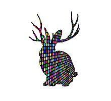 The Spotty Rabbit Photographic Print