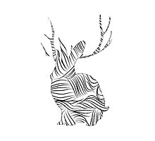 The Stripy Rabbit Photographic Print