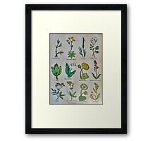 19th century lithography of common flowers and plants  Framed Print