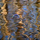 Water reflections & bubble by Laurie Minor