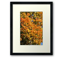 Leaves on a tree coloured in green, yellow red and orange. Framed Print