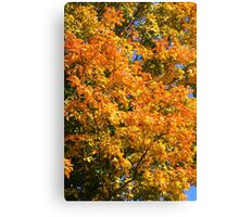 Leaves on a tree coloured in green, yellow red and orange. Canvas Print