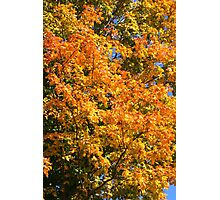 Leaves on a tree coloured in green, yellow red and orange. Photographic Print