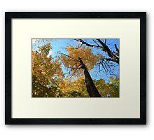 Fall coloured forest.  Framed Print