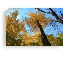 Fall coloured forest.  Canvas Print