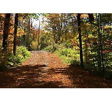 Fall mountain forest road.  Photographic Print