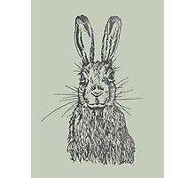 Fluffy hare Photographic Print