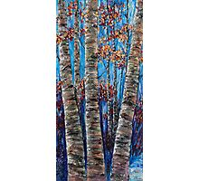 Aspen forest in the Rocky Mountains (Palette Knife) Photographic Print