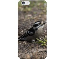 Downy Woodpecker Sitting iPhone Case/Skin