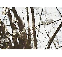Full bloom. Photographic Print