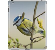 Blue tit on pussy willow iPad Case/Skin