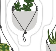 Hanging Succulents and Cacti Sticker